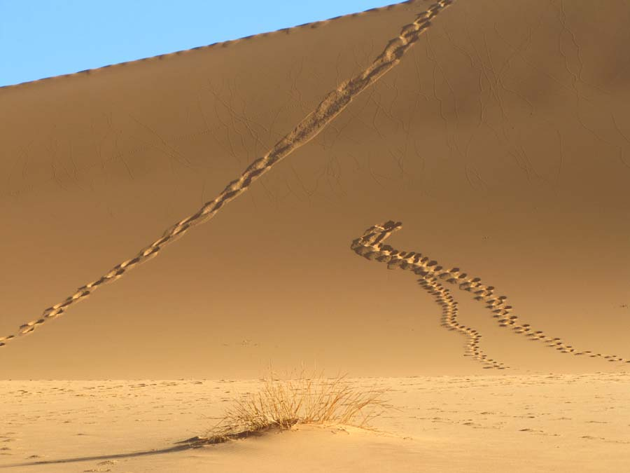 spuren im sand bild